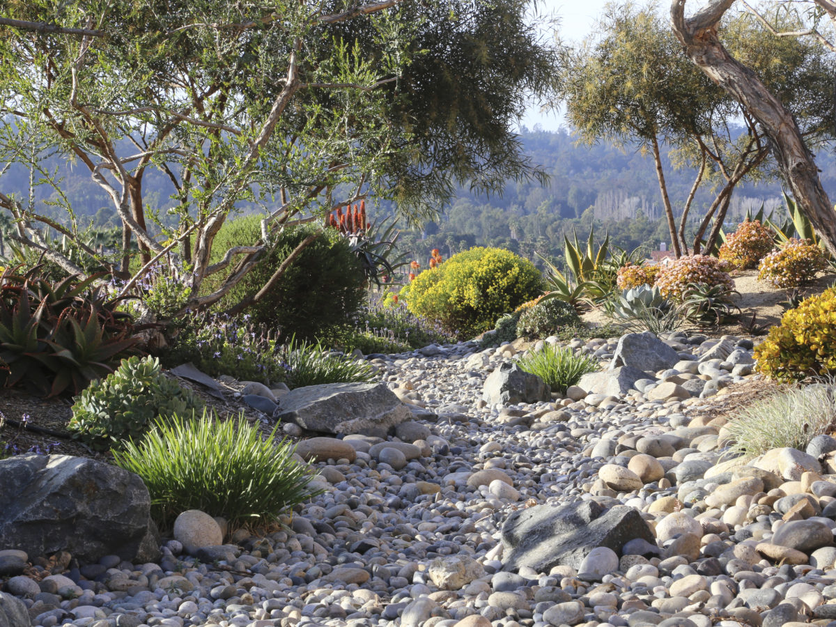 Large succulent garden with boulders and rocks