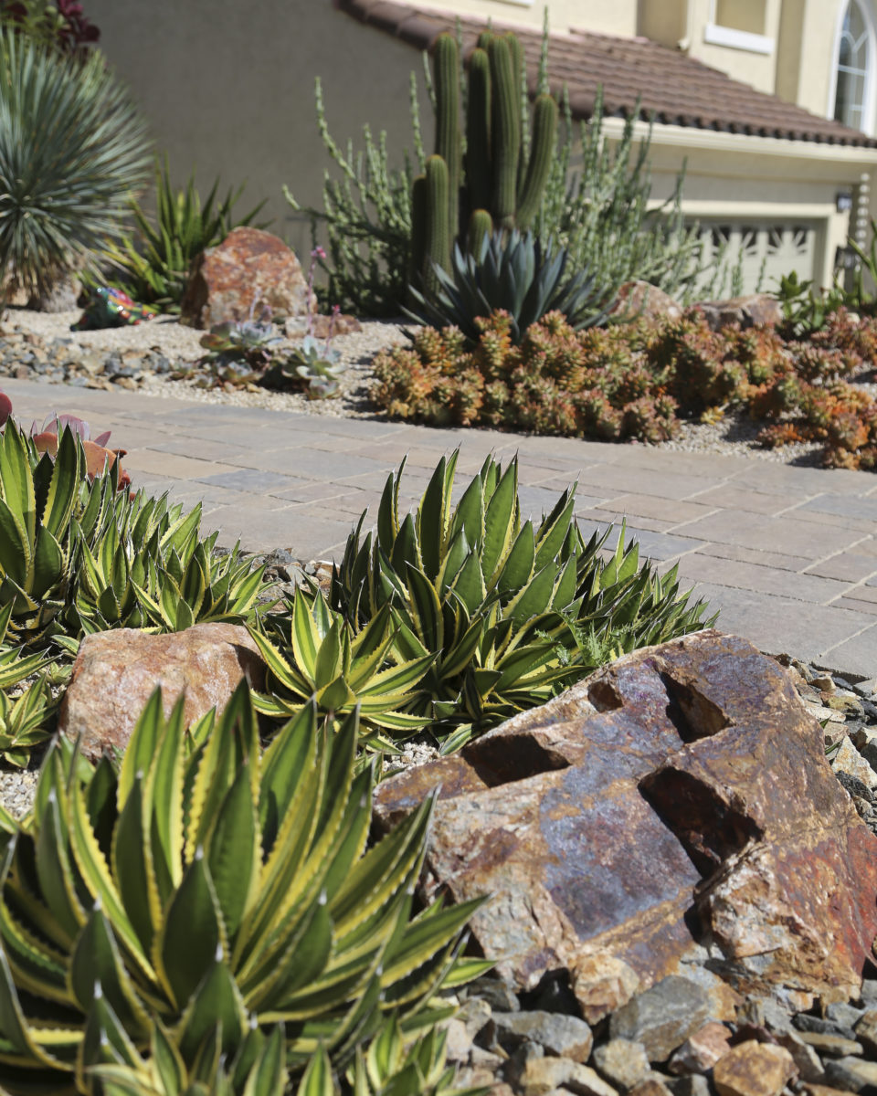 Succulent garden with brown boulders