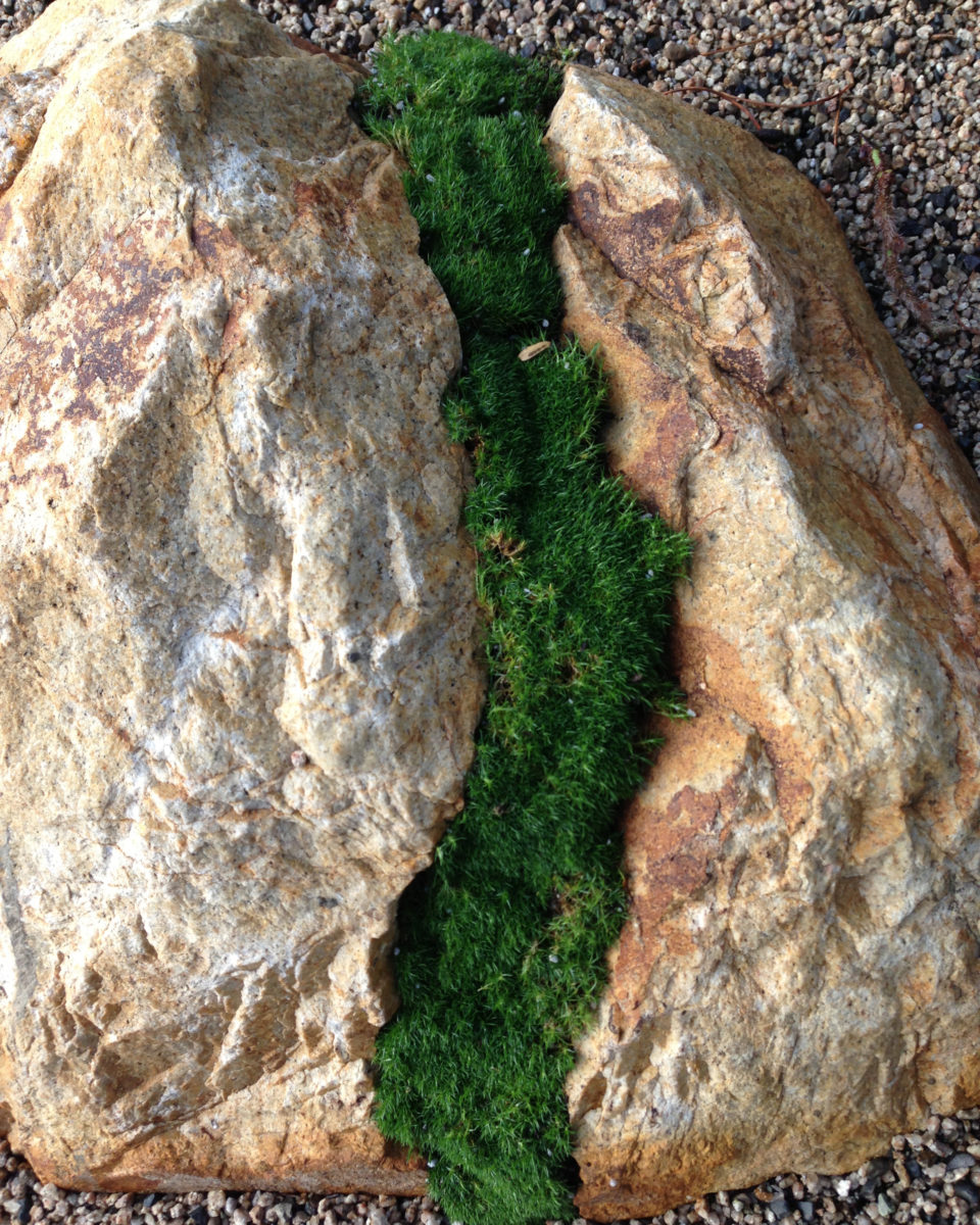 Zen garden boulder with moss on crushed rock