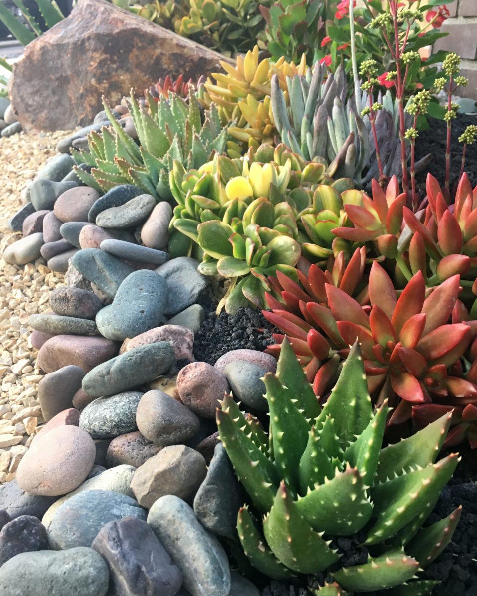 7 Best Rocks for Your Succulent Garden | Southwest Boulder ... Natural Cactus Garden Designs on cactus seattle, cactus for north texas, cactus books, cactus planting ideas, cactus border, cactus gardening tips, cactus painting, cactus cuttings, cactus wedding, cactus backyard ideas, cactus with snow, cactus that flower, cactus graphic, cactus information, cactus in bloom, cactus wooden raised bed, cactus wood, cactus front gardens, cactus fencing, cactus park,